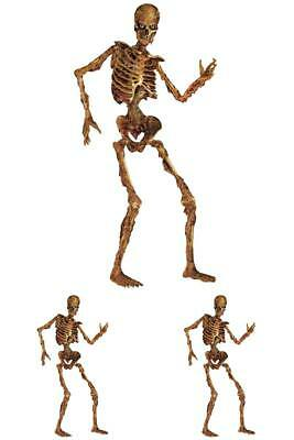 Halloween Jointed Figures Skeleton Party Props Festive Occasions Printed Board