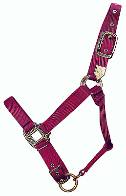 Hamilton 1DA SMWN 1-Inch Nylon Adjustable Horse Halter, Small Size 500 to 800-Po