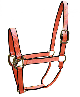 Hamilton Nylon Pony/Mini Donkey Quality Halter for 100 to 200-Pound Horse, 3/4-I