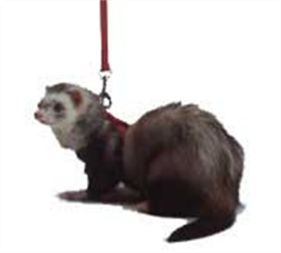 Marshall Ferret Harness and Lead, Red