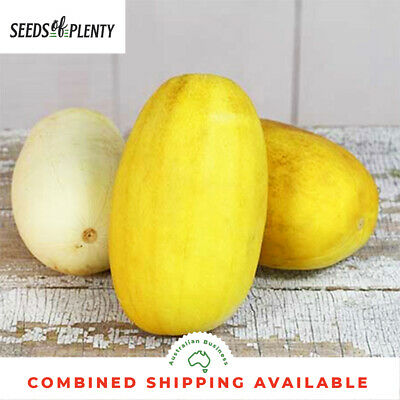 CUCUMBER - Russian Giant (30 Seeds) GIANT GOLDEN SKIN FRUITS