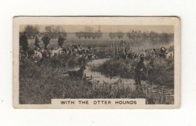 Cigarette card - Hunting with Otter Hounds