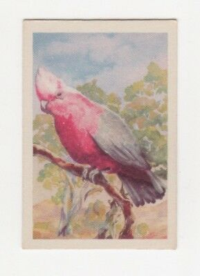 Australian Licorice - Birds -  Galah