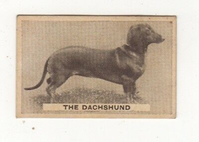 Sweetacres - Favourite Dogs - Dachshund 1932
