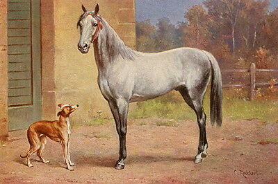 C.Reichert~Dapple Gray Horse and Whippet Dog NEW Large Note Cards
