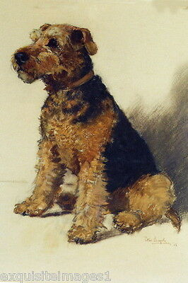 Vintage Art~Airedale Puppy Dog Dogs Sitting~ NEW Large Note Cards