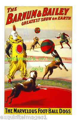 1900 Barnum & Bailey Circus Poster~Clown~Pit Bull Terrier Dogs NEW Lg Note Cards