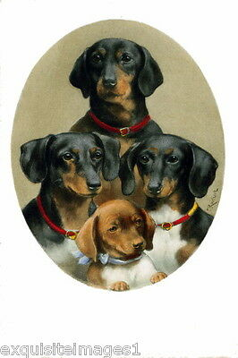 1908 C. Reichert~Family of Dachshund Puppy Puppies Dog Dogs~ NEW Lge Note Cards
