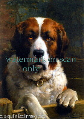 c1900 Art~Handsome St. Bernard Dog Dogs~Puppy~Puppies~Profile NEW Lge Note Cards