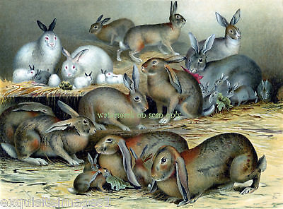 Antique Chromolithographic Image Rabbits~NEW Note Cards
