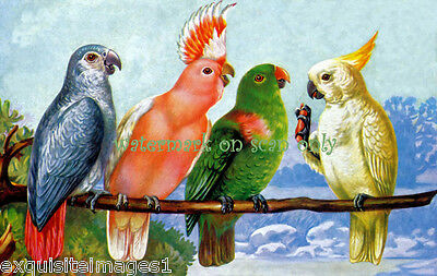 Antique Art~Parrots~African Grey~Major Mitchell~Yellow CrestCockatoos~Note Cards
