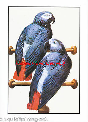 Antique Art~African Gray Parrots~ NEW Large Note Cards