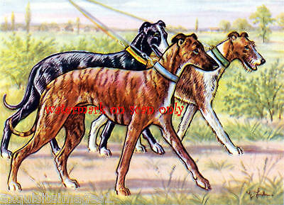 Whippets on a Walk~ NEW Large Note Cards