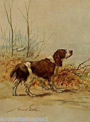 1914 Maud Earl~English Springer Puppy Dog~NEW Note Cards