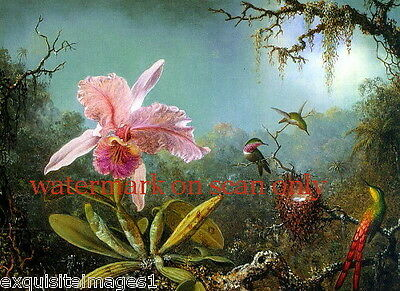 c1860 Purple Cattelya Orchid~Three Brazilian Hummingbirds~NEW Large Note Cards