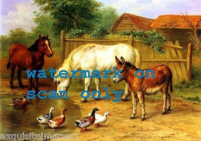 1914~E.Hunt~Cute Burro~Donkey~Ponies~Colorful Ducks~NEW Large Note Cards