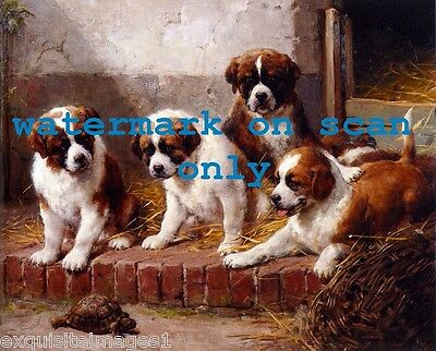 c1900 Art~Cute St. Bernard Dog Dogs~Puppy~Puppies~Tortoise~ NEW Large Note Cards