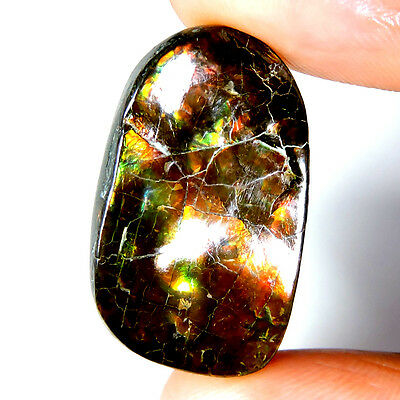28.65cts 100% NATURAL EXCLUSIVE TOP QUALITY AMMOLITE FANCY CABOCHON A+ GEMSTONE