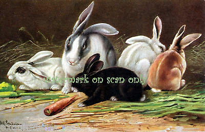 Antique Art~Colorful Herd of Rabbits NEW Lge Note Cards