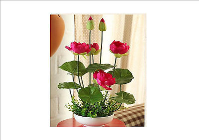 PINK bowl lotus seeds hydroponic plants aquatic plants flower seeds, 4 PC