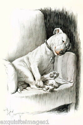 c1930 C.Aldin~ PIT BULL TERRIER DOG Sketch Sitting on Chair~NEW Large Note Cards