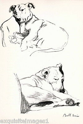 1939 C.Aldin~ PIT BULL TERRIER DOG Sketch Laying on Couch~ NEW Large Note Cards