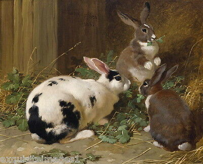 1851 Art~Three Rabbits Eating Grasses~Rich Colors~ NEW Lge Note Cards