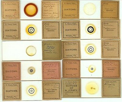Various spp. Diatoms from Various Locations Microscope Slides by C. Henry Kain