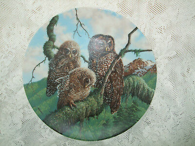 Woodland Watch Spotted Owl Collector Plates Knowles Under Mother's Wing Owlets