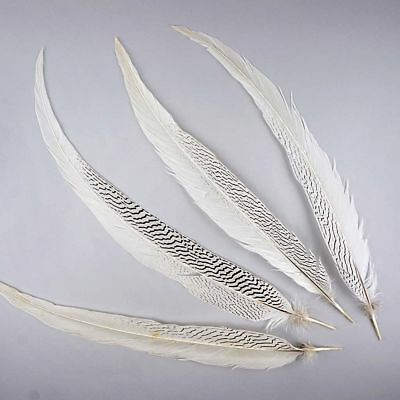 """Natural SILVER PHEASANT Tail Feathers 4-30"""" (Halloween/Bridal/Mardi-Gras/Crafts)"""