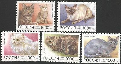 Mint stamps  Fauna Cats 1996 from Russia