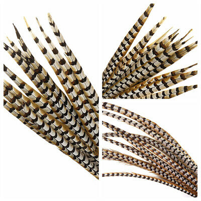 """Natural REEVES PHEASANT Feathers 10-65"""" Many Types! Halloween/Millinery/Hats"""