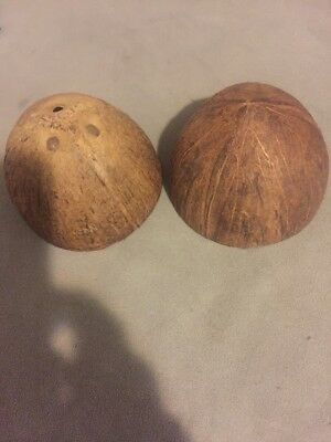 Two Coconut Shell Halves - Monty Python Holy Grail