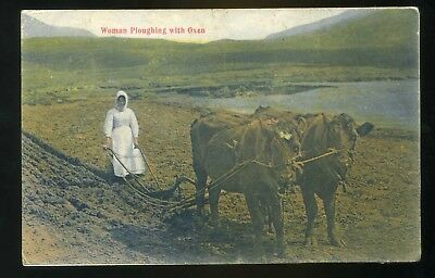 ORKNEYS  Woman ploughing with Oxen - coloured  ( Sanday P/M)