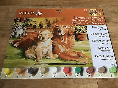 Painting By Numbers - Golden Retrievers