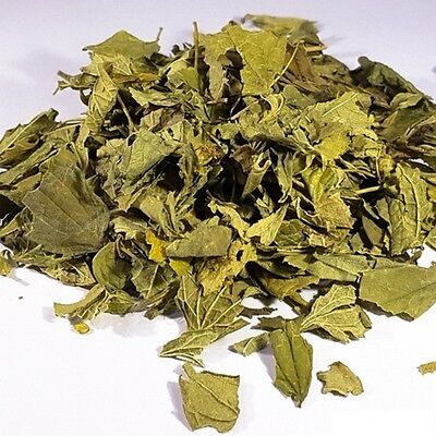Calea Zacatechichi - Dream Herb - Herbe à Rêve Mexicaine - Ethnobotanical 25g