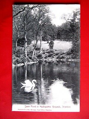 Nice Vintage Postcard- Swan Pond In Hydropathic Ground,shandon  ( Posted 1906)