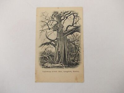 Old Post Card, Lighting Struck Oak, Langshot, Horley