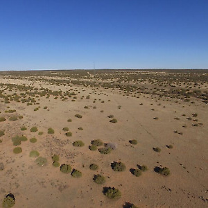 1.25 acre up for auction in Apache County, AZ NO RESERVE!