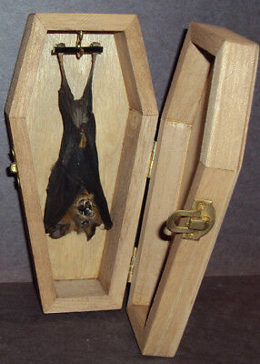 Real Hanging Bat in Wooden Coffin! Gothic Halloween Taxidermy Pet