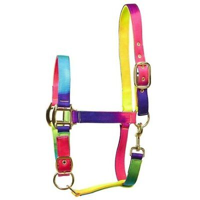 Elico Matterdale Headcollar - Multicoloured with brassed fittings