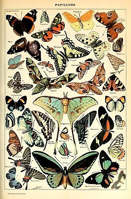 Vintage Victorian Butterfly Specimen Poster VBFY01 PRINT A3 A4 BUY 2 GET  1 FREE