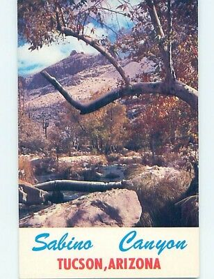 Unused Pre-1980 CANYON SCENE Tucson Arizona AZ hn4555