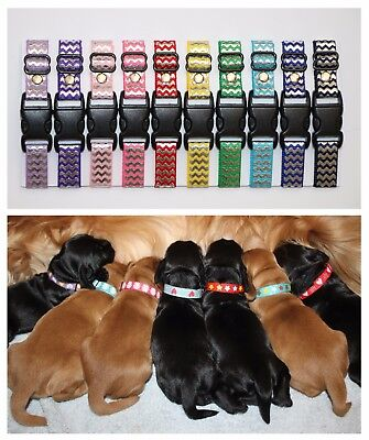 Puppy ID Whelping Collars Chevron Print Choose Your Own Colours for Kit Box
