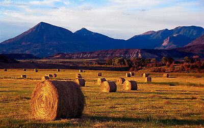 Framed Print - Autumn Hay Bales Back Country USA (Picture Poster Farming Farm)