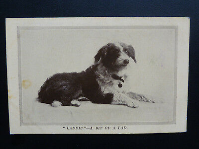 """Dog Postcard, Issued by National Canine Defence League """"Laddie"""" - A Bit of A Lad"""