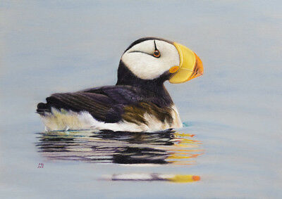 """Original pastel drawing """"Horned puffin"""""""