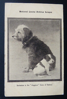 Dog Postcard, National Canine Defence League, Cute puppy and terrier type