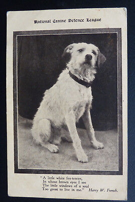 Dog Postcard, National Canine Defence League -Fox Terrier, Words by Harry French