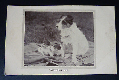 """Dog Postcard- National Canine Defence League, Terrier & Puppies """"Mother Love"""""""